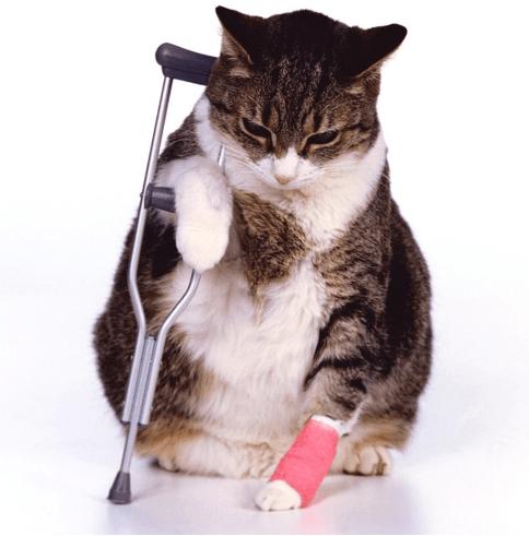 Compare Cat Insurance