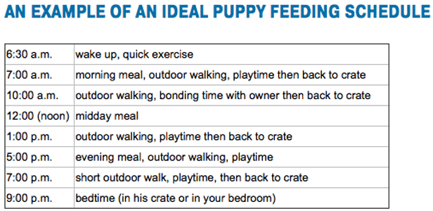 Dog Feeding Schedule Puppy