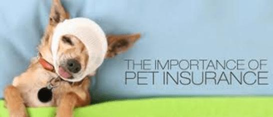 dog health insurance cost